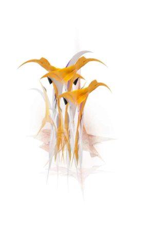 Art animalier par Paradox'Art. Trois couleurs dominent : blanc, orange et gris.